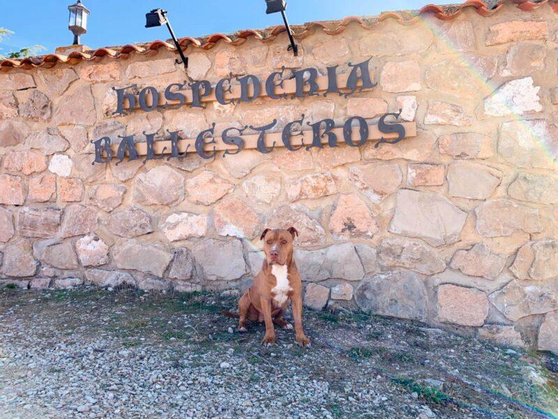 Escapada Canina en Cuenca